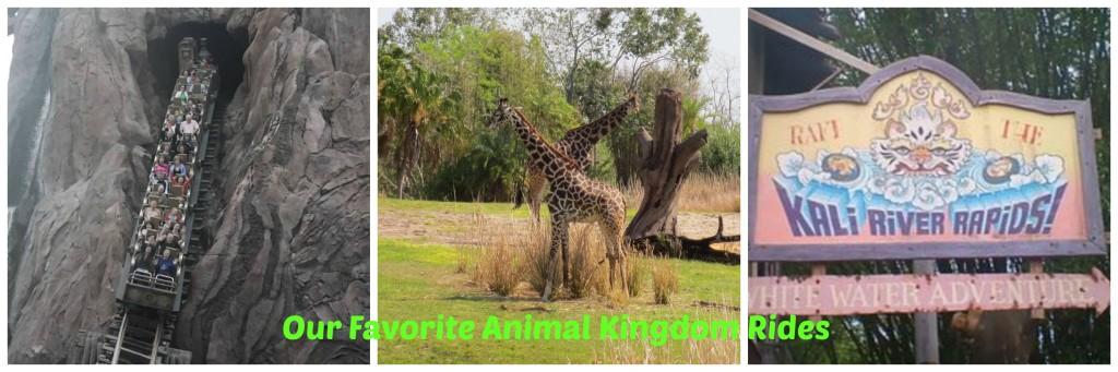 Animal kigndom